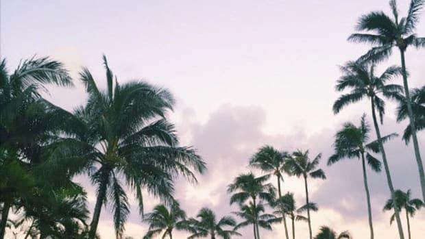 che-tropics.jpg