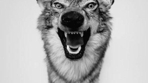 yelawolf-love-story.jpg