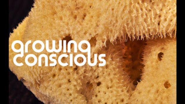 treehouse-growingconscious.jpg