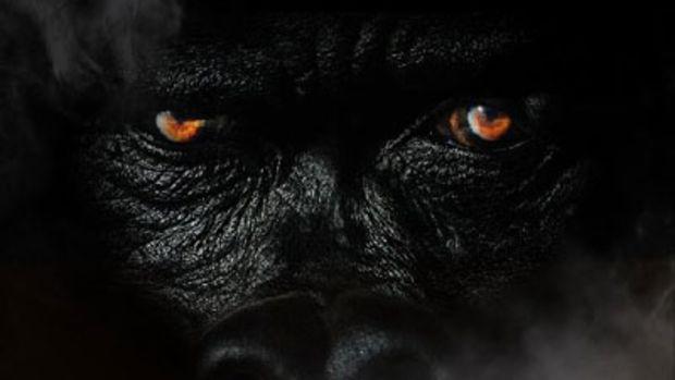 sheek-louch-silverback-gorilla-2.jpg