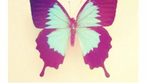 gscott-butterflyeffect.jpg