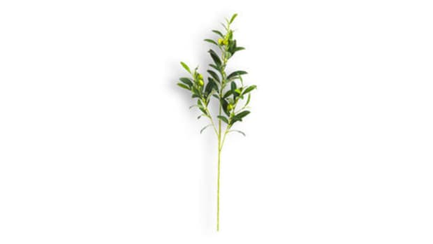 locksmith-olive-branch.jpg
