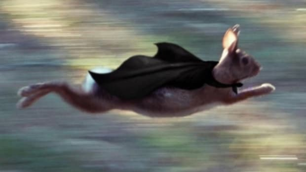 lance-skiiiwalker-speed.jpg