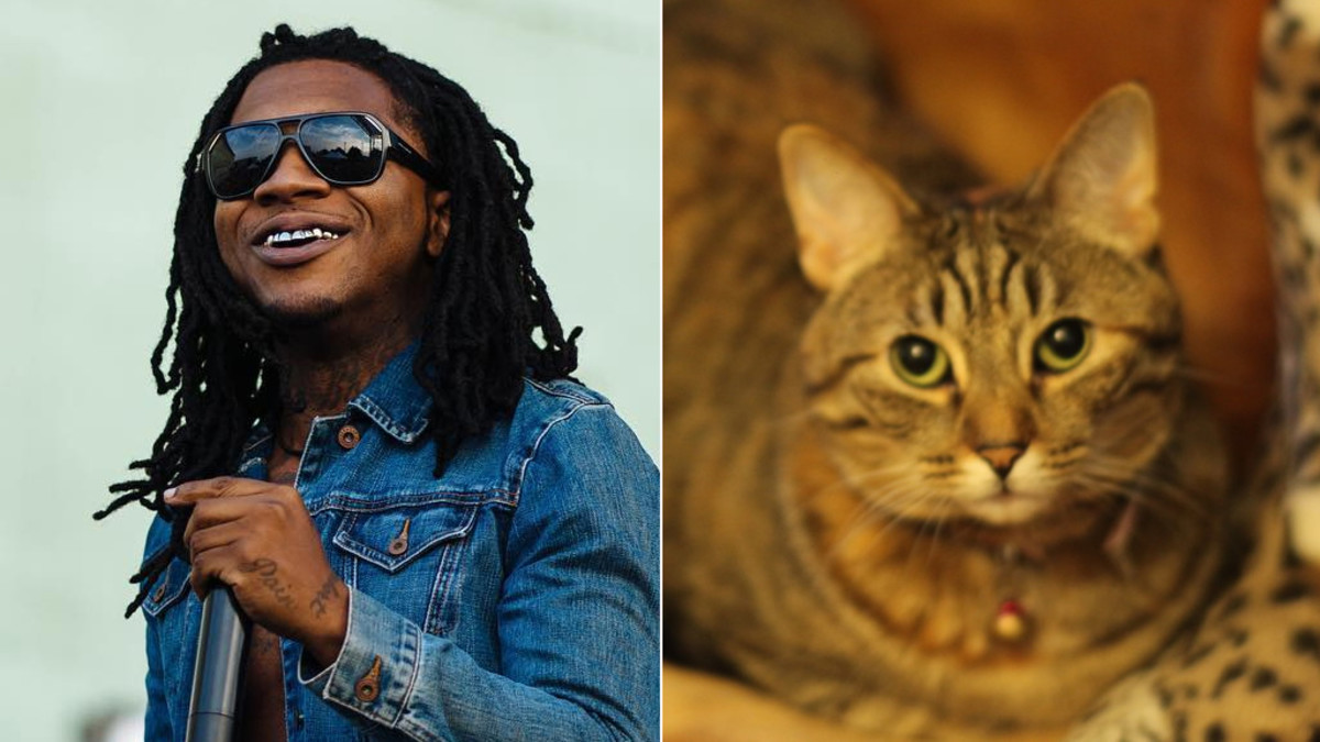 A Brief History Of Lil B Making Songs With His Cat