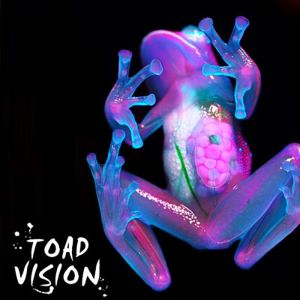 frankleone-toadvision.jpg