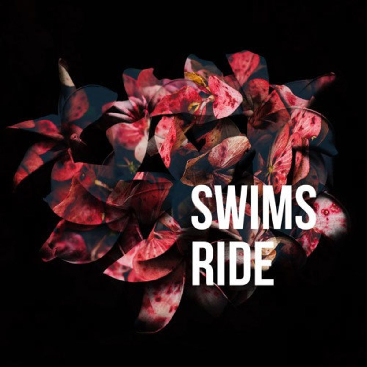 swims-ride.jpg